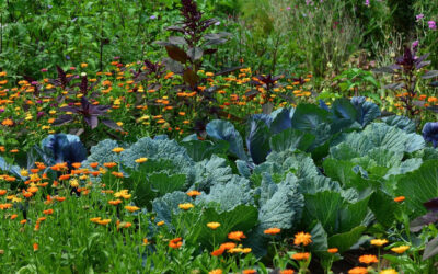 Are You Tending to Your Gardens?